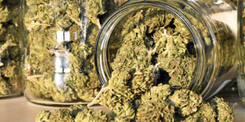 Hybrid Cannabis Strains Online