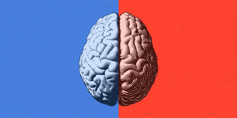 brain supplement drugs
